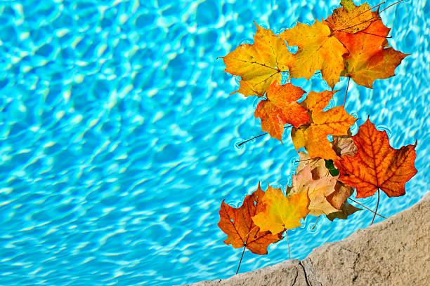 Herbst Blätter im pool treiben – Foto