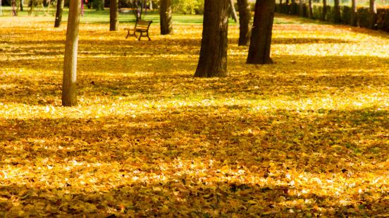 Fall Leaves - Hojas de Otoño