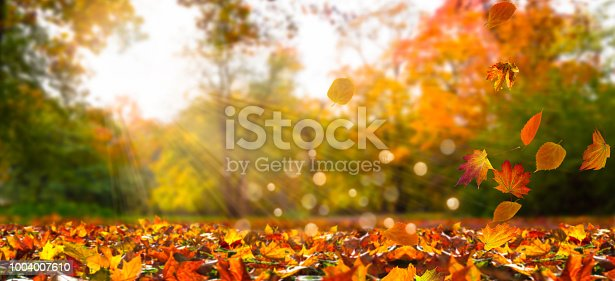 fall leaves in idyllic landscape