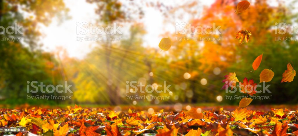 fall leaves in idyllic landscape stock photo