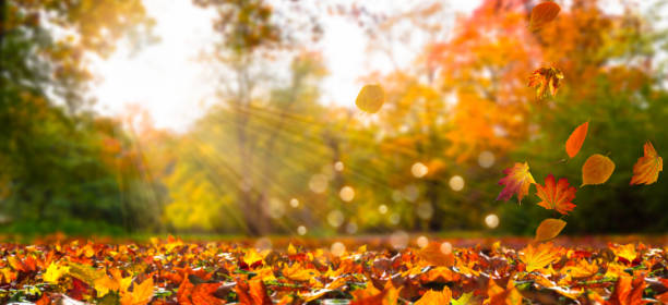 fall leaves in idyllic landscape - leaf imagens e fotografias de stock