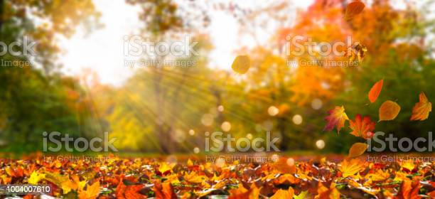 Photo of fall leaves in idyllic landscape