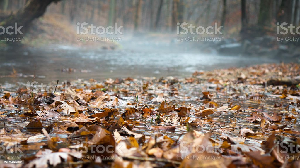Fall Leaves in Stream stock photo