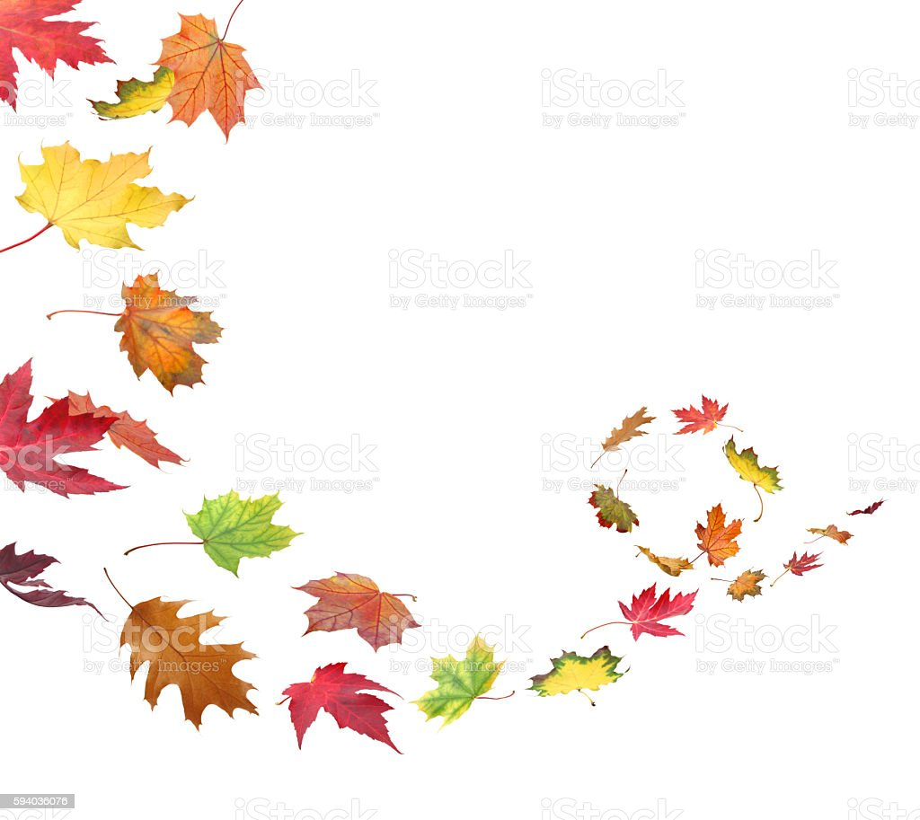 Fall Leaves In The Wind Stock Photo Amp More Pictures Of