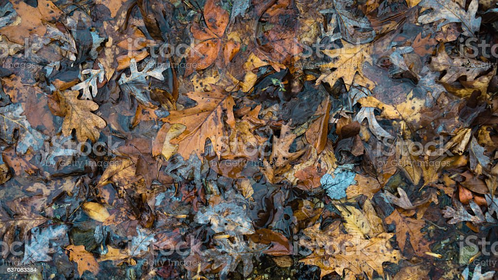 Fall Leaves Laying in Water stock photo