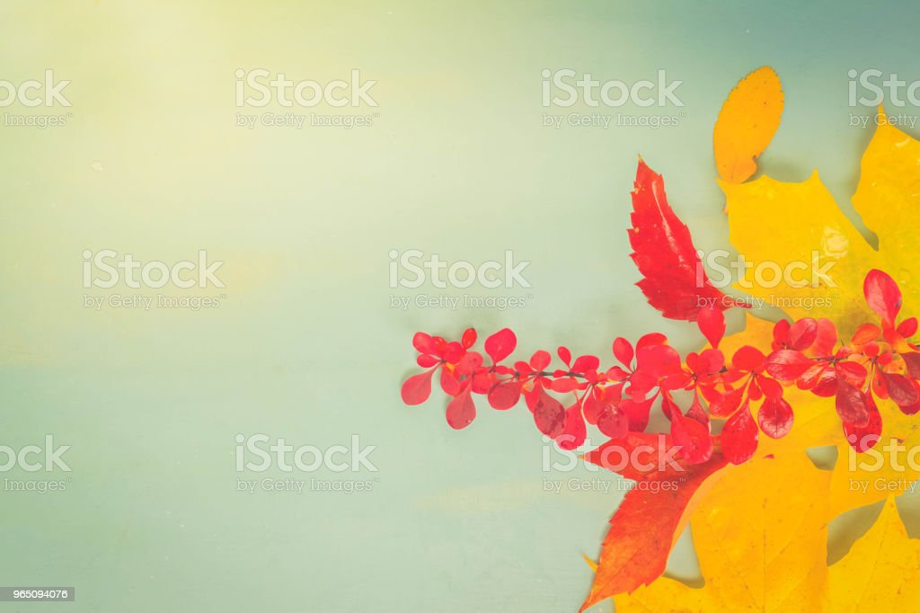 Fall leaves on blue royalty-free stock photo
