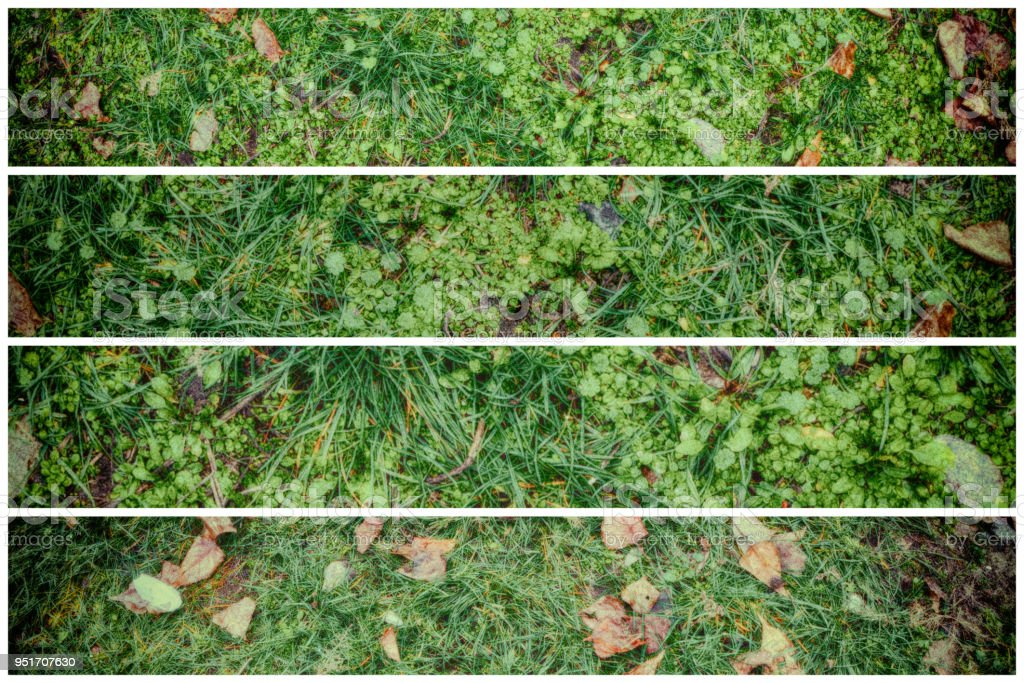 grass field from above. Fall Leaves On Green Grass Field, View From Above, Autumn Background  Royalty-free Field Above