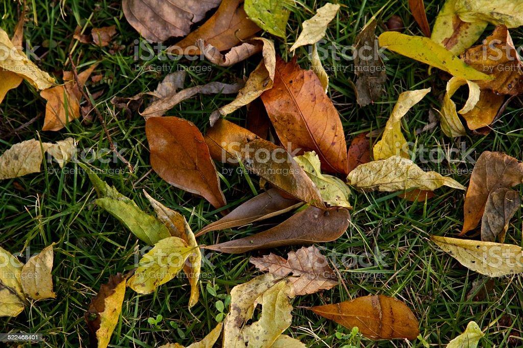 Fall Leaves on Green Grass stock photo