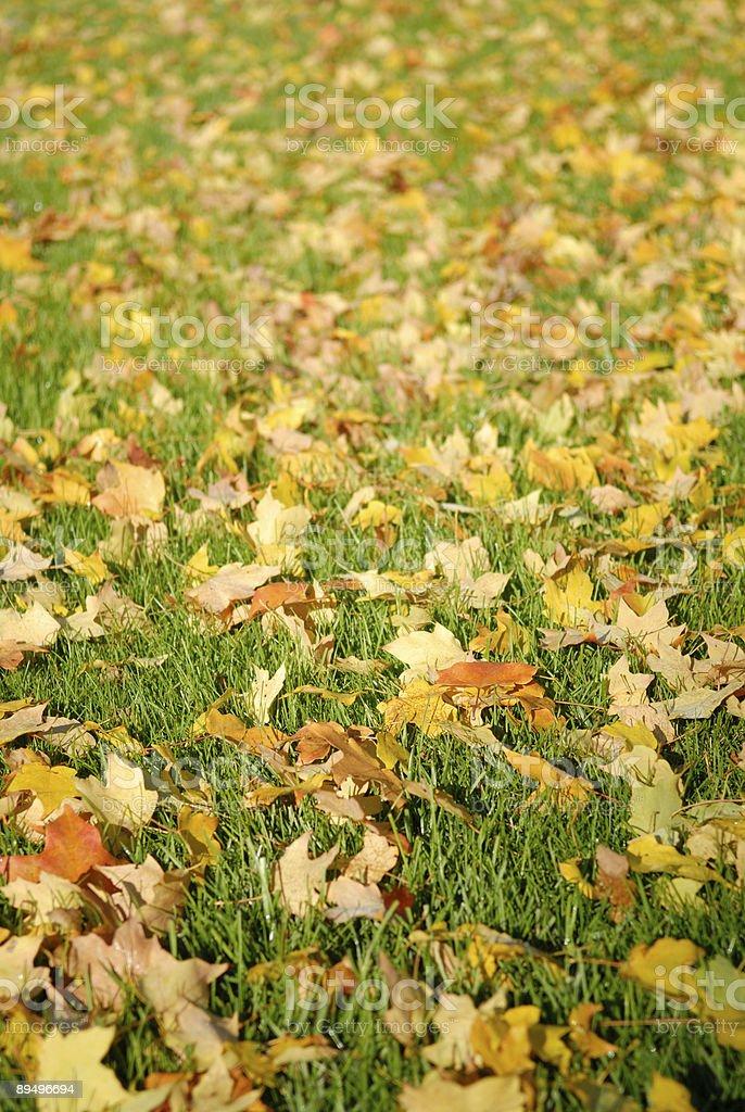 Fall Leaves on Lawn royaltyfri bildbanksbilder