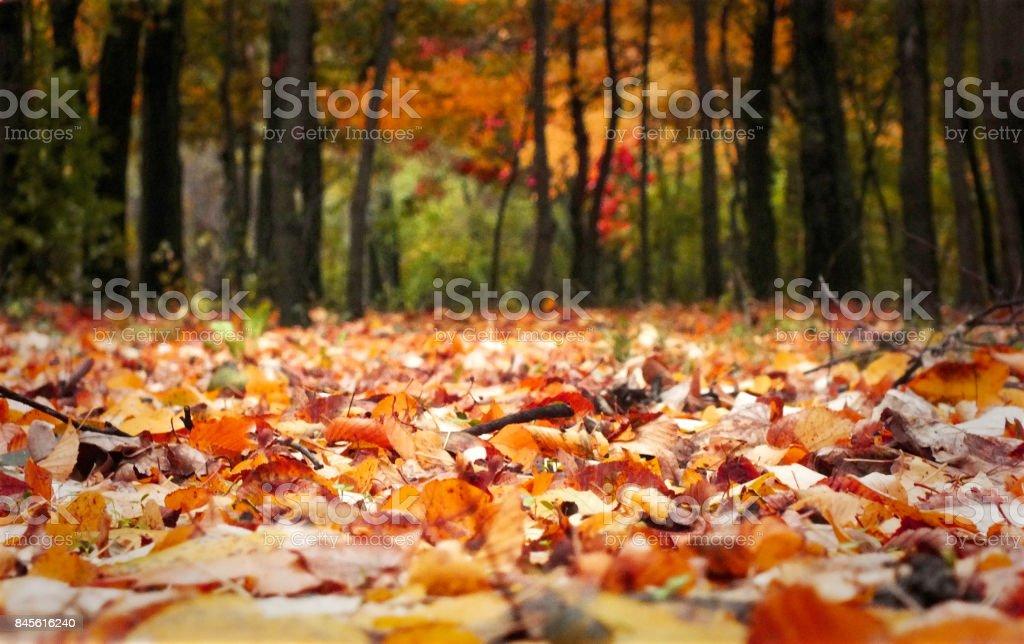 Feuilles d'automne sur Meadow en automne - Photo