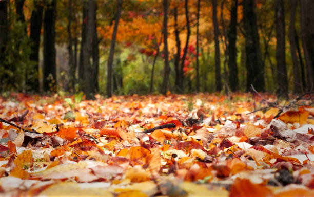 Fall leaves on meadow in autumn - foto stock