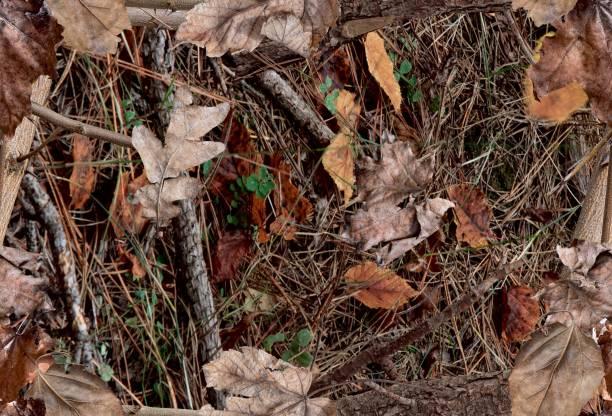 fall leaves on the bush. ideal for hunting and military purposes. - kamuflaż zdjęcia i obrazy z banku zdjęć