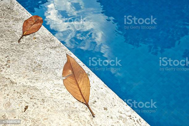 Photo of Fall leaves on the edge of a blue swimming pool
