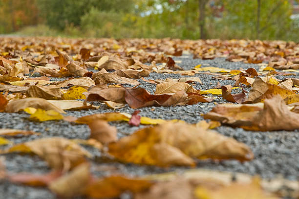Fall  leaves on the ground stock photo