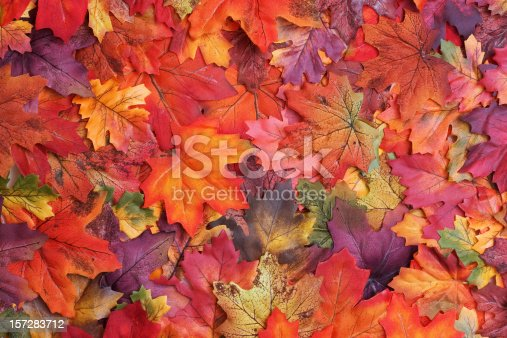 A sprawl of fake fall colored leaves.