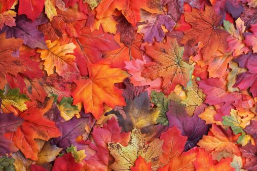 A sprawl of fake fall colored leaves.