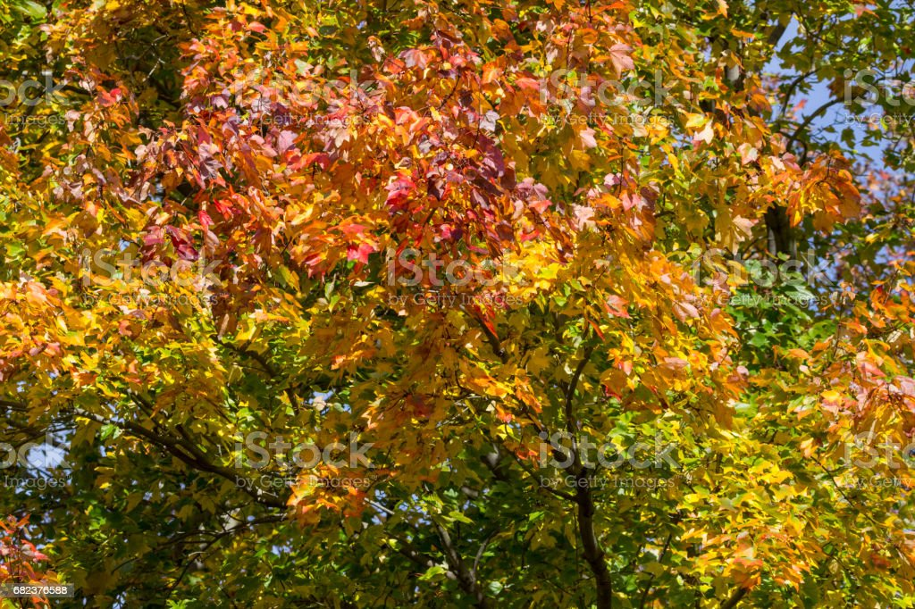 fall leaves foto stock royalty-free