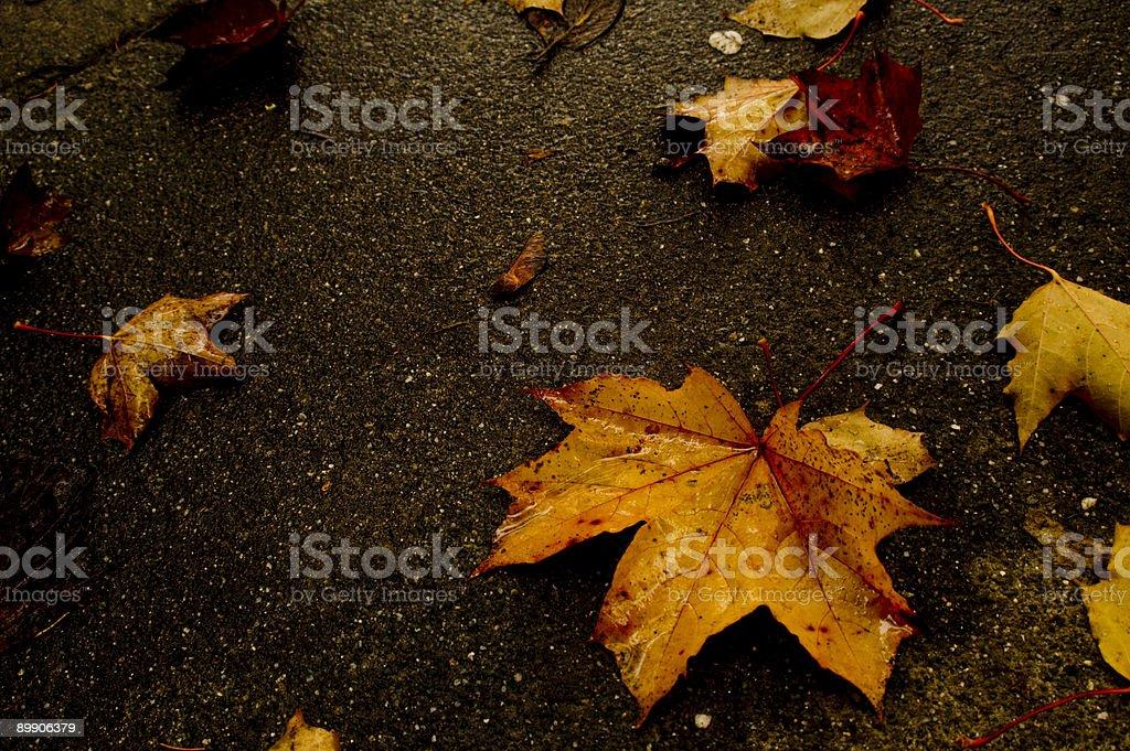 Herbst Blätter Lizenzfreies stock-foto