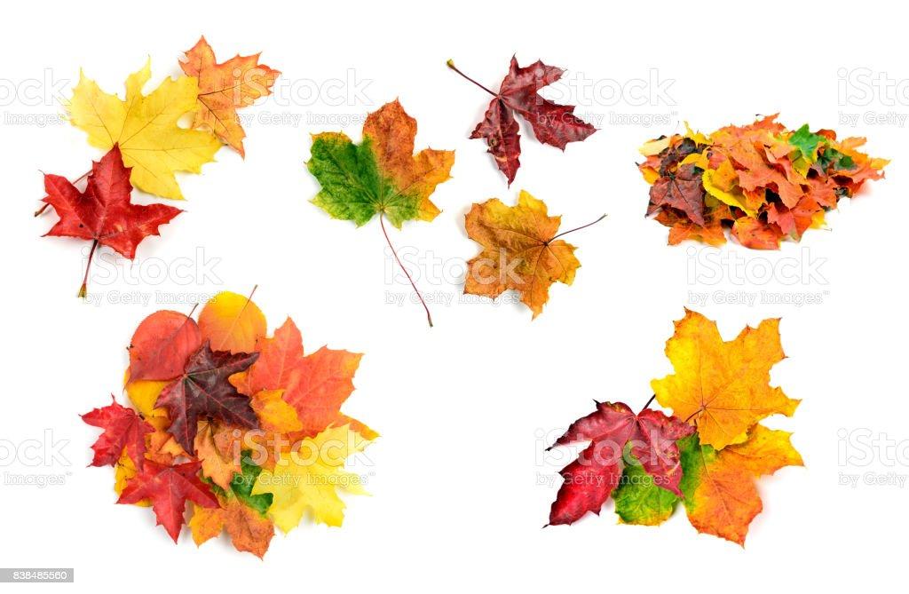 Fall leaves set stock photo