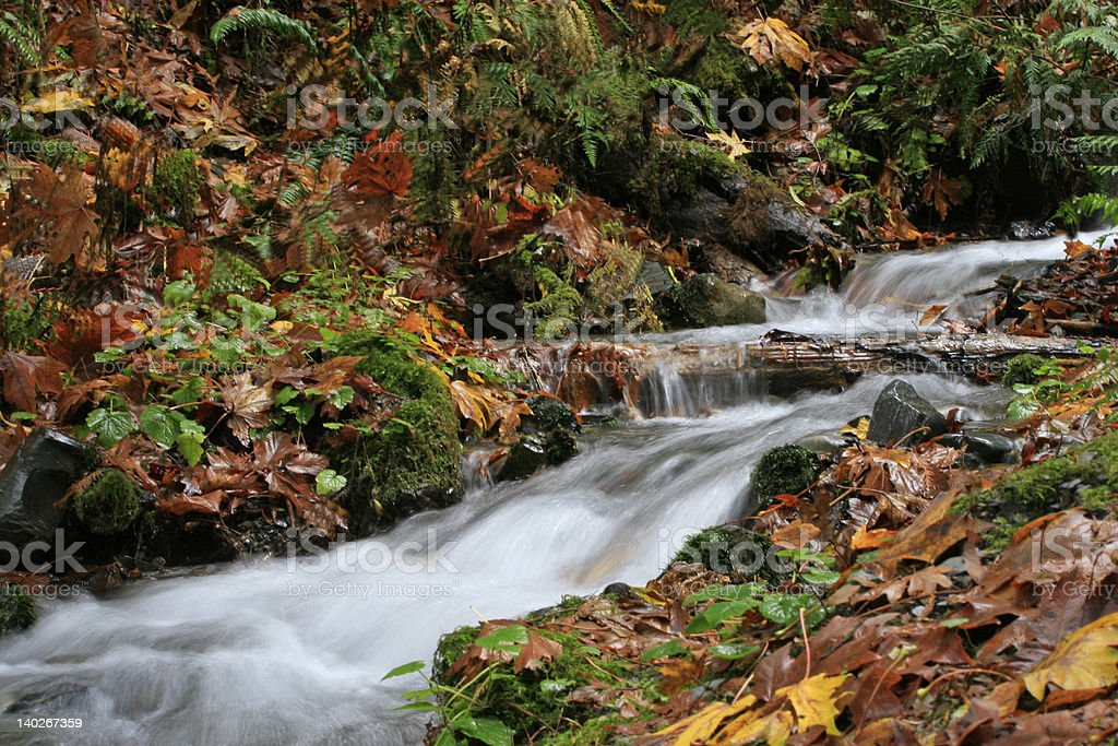 Fall leaves surround the milky looking stream stock photo