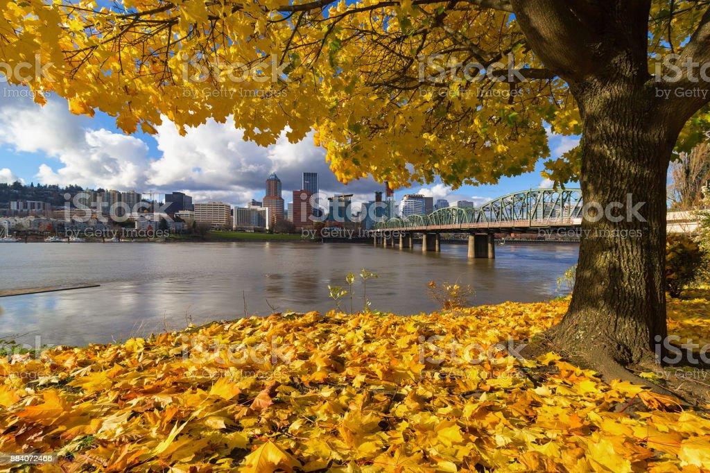 Herbstlaub unter Ahornbaum mit Portland OR Flussufer Stadt skyline – Foto