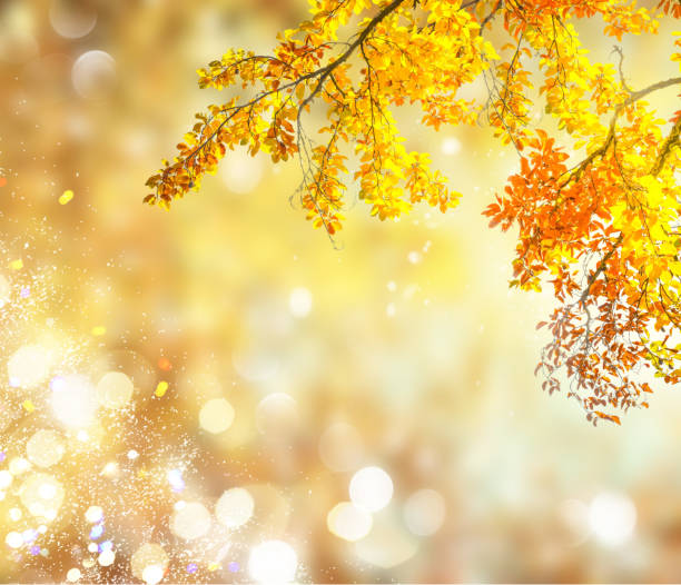 fall leaves with green grass stock photo