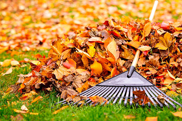 Fall leaves with rake Pile of fall leaves with fan rake on lawn fall leaves stock pictures, royalty-free photos & images