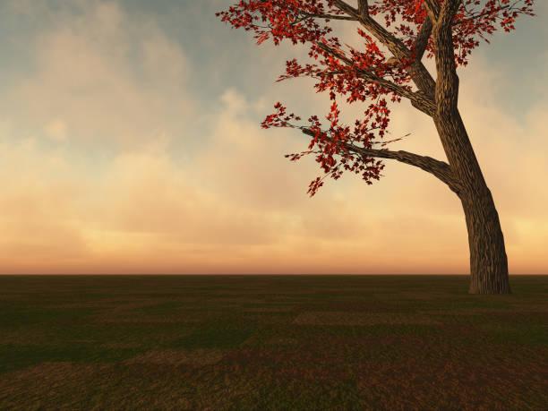fall maple tree on horizon - folha de caderno imagens e fotografias de stock