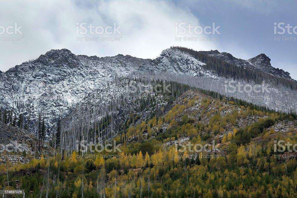 Fall Meets Winter stock photo