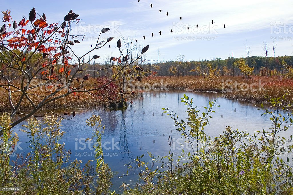Fall Migration royalty-free stock photo