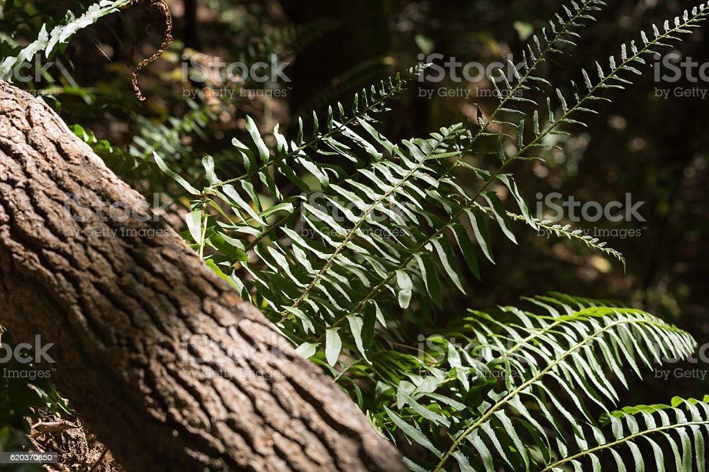 Fall Mountain ferns zbiór zdjęć royalty-free