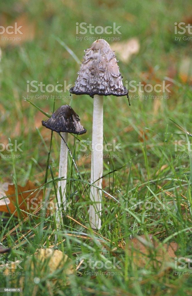 가을맞이 버섯 royalty-free 스톡 사진