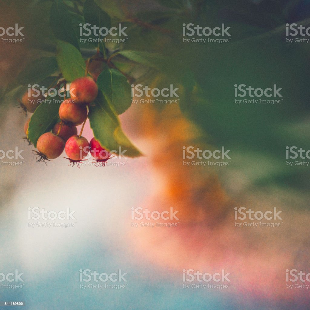 Fall nature background in green tones with red hawthorn berries stock photo