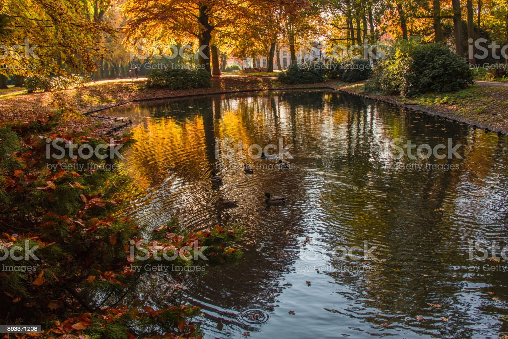 Fall of the leaves in the Park in Oosterhout, Noorth Brabant, Netherlands, October stock photo