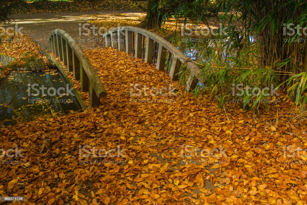Fall of the leaves in the wonderful park with bridge. stock photo