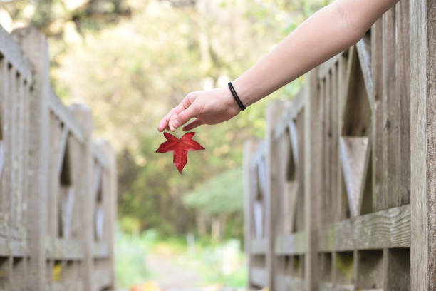 Fall on a Footbridge hand holding a leaf in the fall on a footbridge jude beck stock pictures, royalty-free photos & images