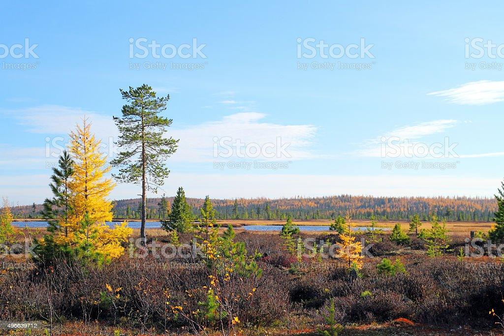 Fall on the Yamal Peninsula stock photo