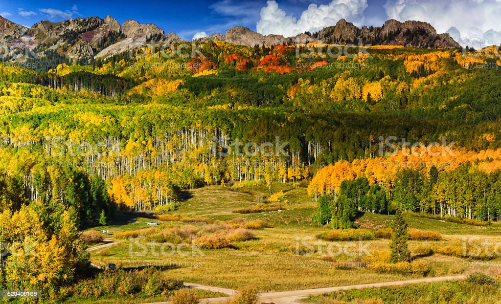 Fall Painted Forest stock photo