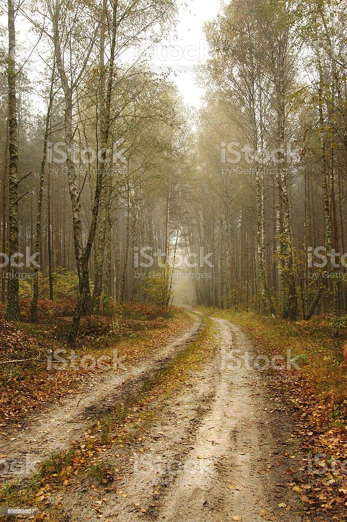 Fall Path royalty-free stock photo
