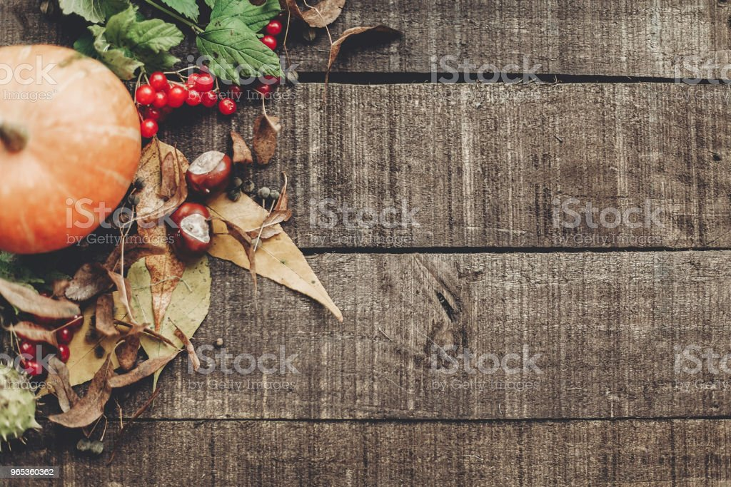 fall photo, beautiful pumpkin with leaves and berries on rustic wooden background, top view. space for text. thanksgiving or halloween concept greeting card flat lay. cozy autumn mood. holiday zbiór zdjęć royalty-free