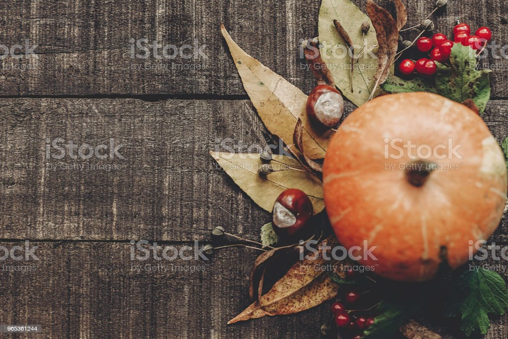 fall photo, beautiful pumpkin with leaves and berries on rustic wooden background, top view. space for text. thanksgiving or halloween concept greeting card flat lay. cozy autumn mood. holiday royalty-free stock photo