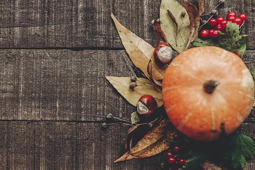 Fall Photo Beautiful Pumpkin With Leaves And Berries On Rustic Wooden Background Top View Space For Text Thanksgiving Or Halloween Concept Greeting Card Flat Lay Cozy Autumn Mood Holiday Stock Photo - Download Image Now