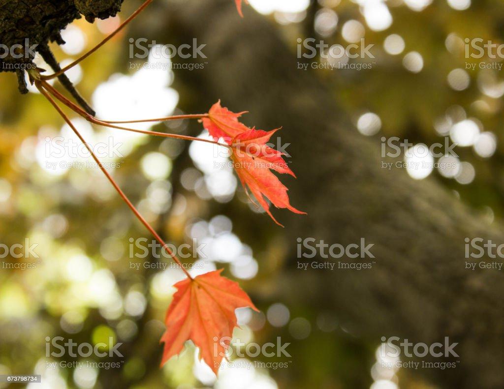 Fall royalty-free stock photo