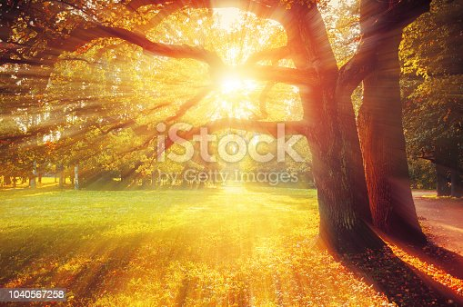 Fall picturesque landscape. Fall trees with yellowed foliage in sunny October park lit by sunshine. Colorful fall landscape in picturesque tones