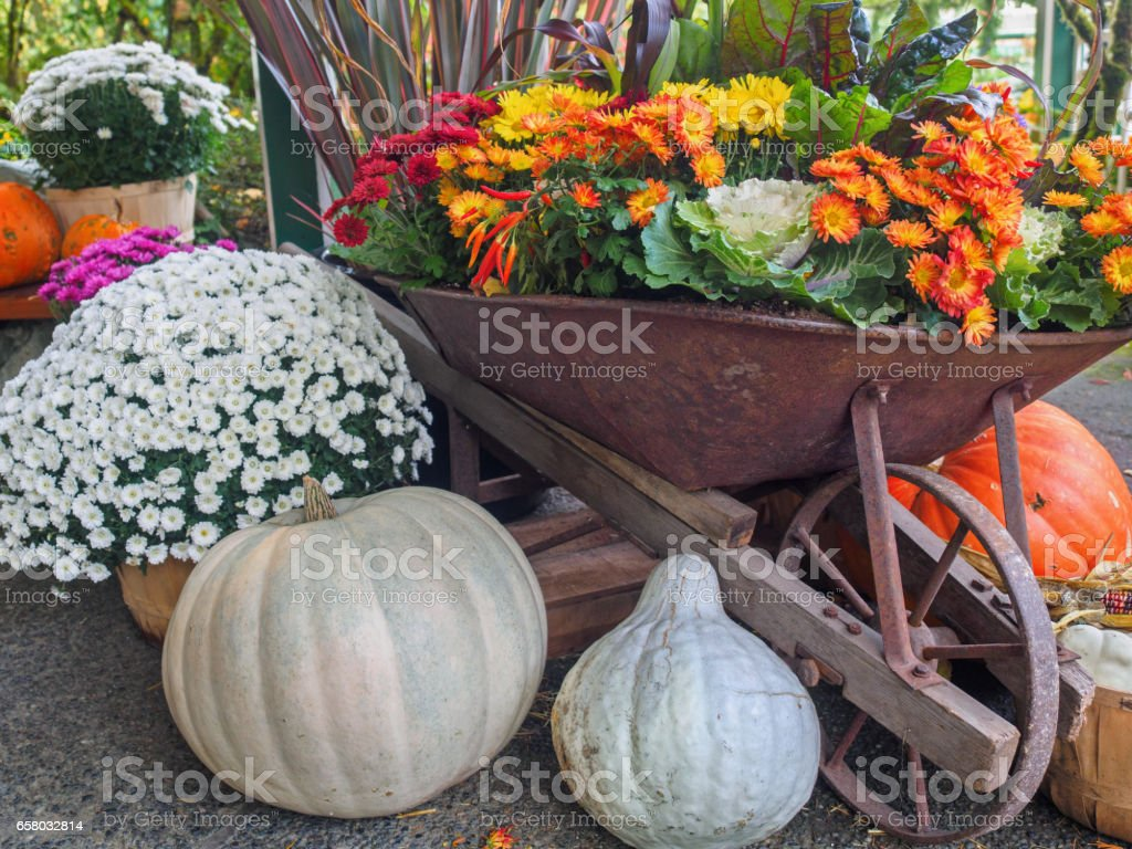 Fall produce arranged on a display during Thanksgiving season stock photo