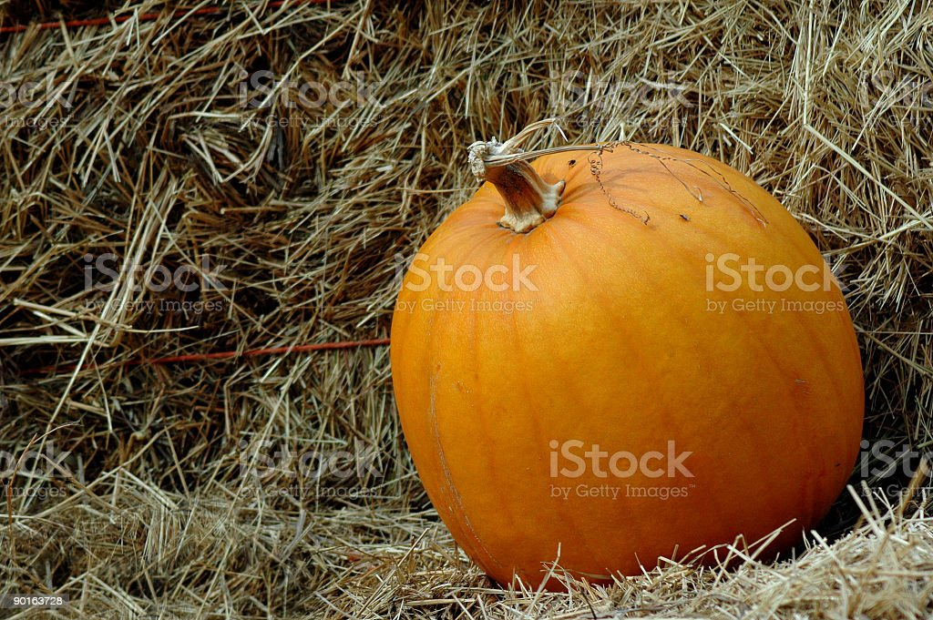 Fall Pumpkin 2 royalty-free stock photo