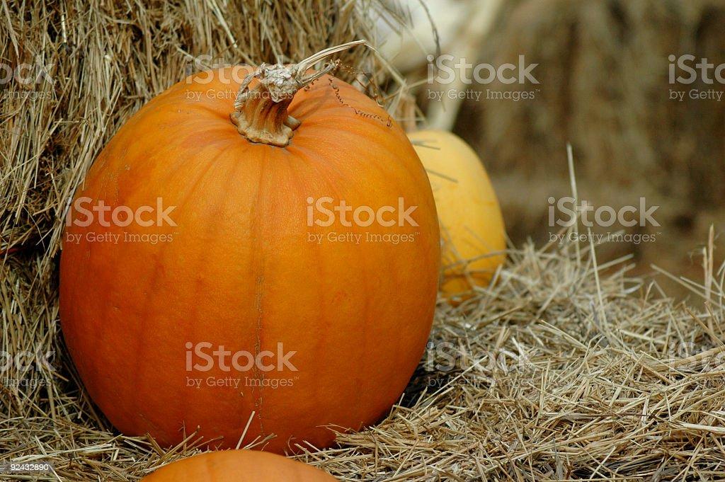Fall Pumpkin royalty-free stock photo