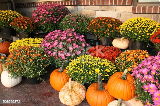 Fall, Autumn, pumpkins, gourds and colorful mums