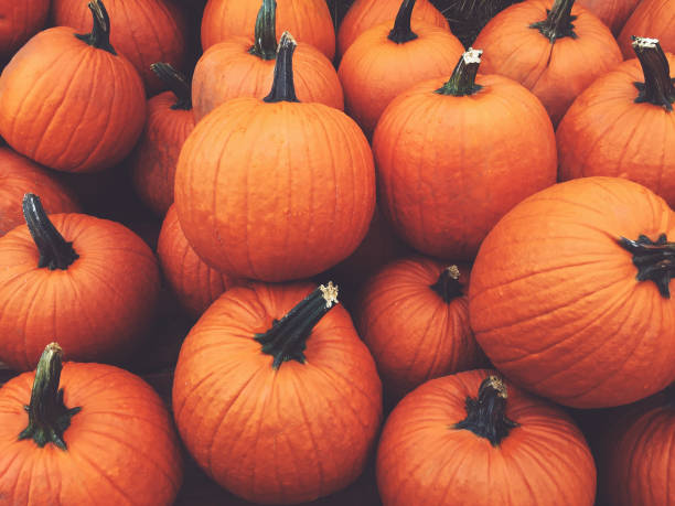 Fall Pumpkins Background Pile of Fall Harvest Pumpkins Halloween and Thanksgiving Holiday Background pumpkin stock pictures, royalty-free photos & images