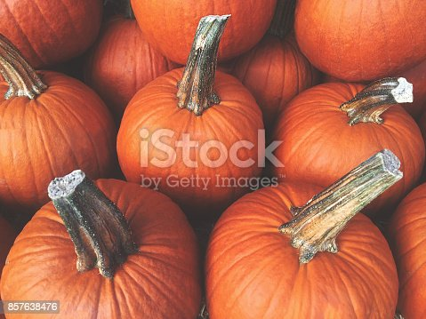 Orange Fall Pumpkins Background, Horizontal